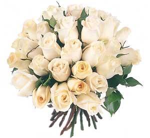 Roses1-7.jpg